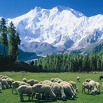 Nanga Parbat (8126-M) Expedition 2013